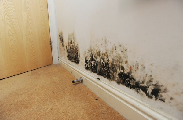 Mildew and mold Difficulties